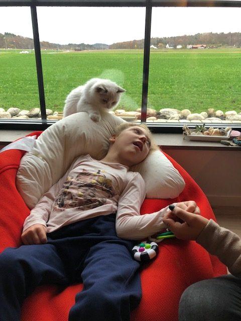 Krönika av Christel Juhlin: Frågar du hundens ägare hur mycket den förstår?